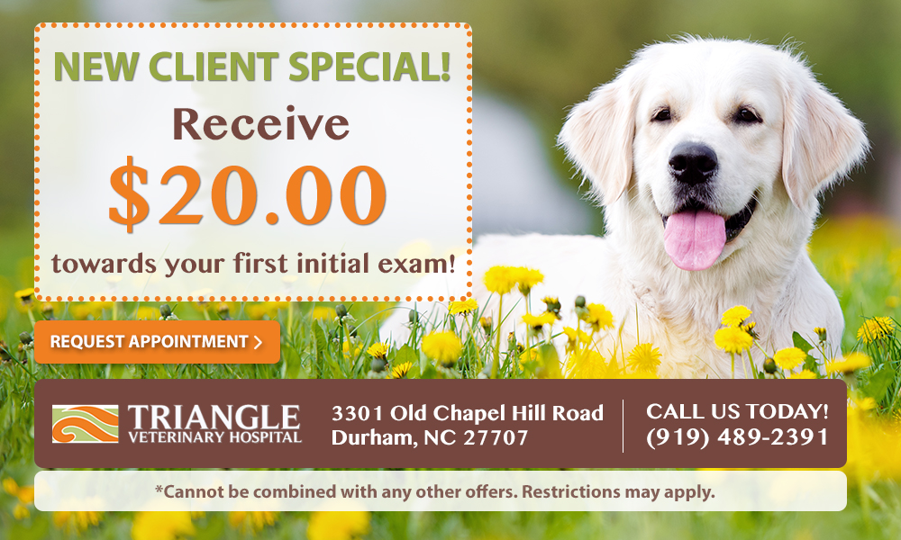 new client exam special